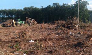 Noticed land clearing on Vermont Avenue? It's for a new Yeshiva campus